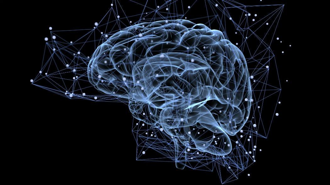 cervello-1583529489.jpg